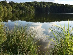 Lake Herrick is located next to the Intramural Fields in east campus off of College Station Road. (Photo: Mari Kasuya)
